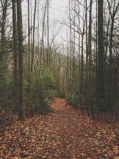 Blood Mountain Trail, Vogel State Park, Georgia