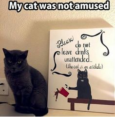 My cat was not amused! LOL