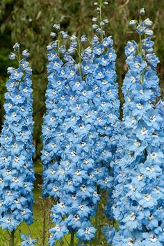 Flowers and Garden Kitchen — pocula: sahin