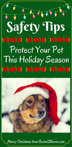 Christmas can cause your pet injury if you aren't aware of these safety tips. #Pet #Pets #Christmas