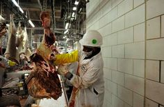 Here's another example of how Islam is not compatible with a modern civilized society. Muslim workers walked off the job at a Colorado meat processing plant because they demanded more accommodation…