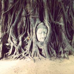 buddha head at aytthaya national park thailand
