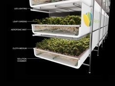A new aeroponics 'farm' in New Jersey couple represent a breakthrough in agriculture. growing without soil World's largest vertical farm grows without soil, sunlight or water in Newark Agriculture Durable, Urban Agriculture, Urban Farming, Aquaponics System, Aeroponic System, Farming System, The Farm, Vertical Farming, Vertical Gardens