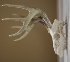 17 Apart: How to Clean and Wall Mount Deer Antlers
