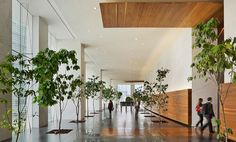 Image 12 of 29 from gallery of Antara I Corporate Building / Sordo Madaleno Arquitectos. Photograph by Paul Rivera Lobby Interior, Interior Design, Inside Garden, Eco Green, Building Structure, Antara, Landscaping Plants, Indoor, Urban