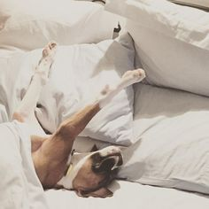 """Ahhh, Saturday...."" Happy weekend, dog lovers! #dogs #doglovers #weekend #saturday"