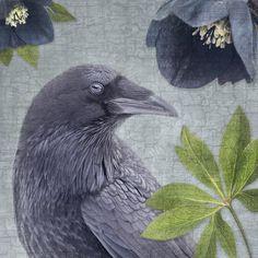 RAVEN FLORA #2 - Fine Art Print, Raven Portrait