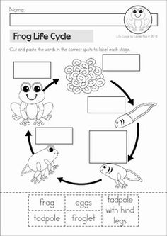 Frog Life Cycle cut and paste unit. A page from the unit: cut and paste the life cycle stages