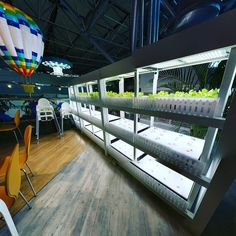 Look what I spotted at Taiwan's Taoyuan airport! The Mos Burger next to this grows the lettuce it uses in its burgers. Awesome!   If anyone is interested in beta testing VegBed hydroponic growing foam medium email (info@vegbed.com) for details!  #hydroponics #maximumyield #rockwool #urbangarden #sustainable #growyouown #indoorgarden #vegetables #followme #localfood #ledlights #indoorgardening #raisedbeds #growveggies #seedlings #sprouts #veggies #aquaponics #lettuce #nft #aeroponics…