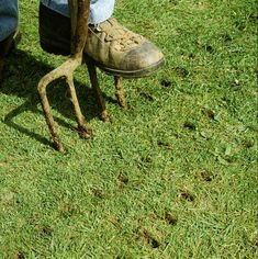 When and How Do You Aerate Your Grass is part of Lawn care diy - Lawn aeration will help you remove thatch from your grass Severe cases of soil compaction may demand core aeration, which requires special equipment Garden Care, Lawn Repair, Growing Grass, Lawn Care Tips, Lush Lawn, Lawn And Landscape, Landscape Steps, Landscape Designs, Landscape Plans