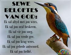 Afrikaanse Quotes, Goeie Nag, Life Thoughts, Love Rose, Spiritual Inspiration, Bible Scriptures, Christianity, Encouragement, Poetry