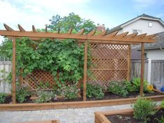 Trellis for a grape vine and screen from the neighbor.- maybe out front, where the neighbor has vines already ?
