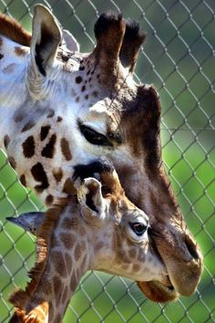 I wonder what the baby giraffe said. . . .