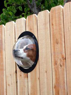 13 Ingenious Pet Inventions