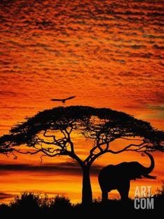Elephant Under Broad Tree Photographic Print by Jim Zuckerman at Art.com