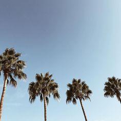 Lazy Sundays in Cali