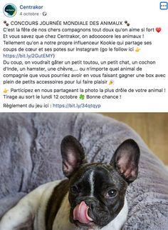 Journée mondiale des animaux Centrakor French Bulldog, Instagram, Jars, Pageants, Animaux, French Bulldog Shedding, Bulldog Frances, Bulldog French, French Bulldogs