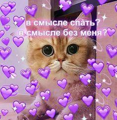 Cat Mem, Meme Valentines Cards, Hello Memes, Russian Memes, Crush Memes, Cute Cats, Cool Pictures, Hello Kitty, Lol