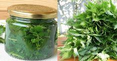 TAKTO jednoducho si vyrobíte sirup z mladej žihľavy: Znižuje symptómy alergií, prečisťuje krv a čistí pečeň! Herb Garden, Home And Garden, Healthy Style, Home Canning, My Secret Garden, Pickles, Natural Remedies, Life Is Good, Mason Jars