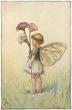 Illustration for the Daisy Fairy from Flower Fairies of the Spring.  A small…                                                                                                                                                                                 Mehr