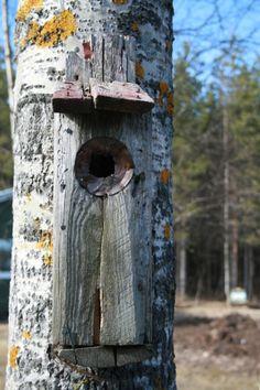Vanha linnunpönttö, isän tekemä. Old birdhouse