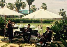 Música Bodas Albacete, Cuenca y Murcia.     Músicos profesionales gdbodas@hotmail.com  670666472