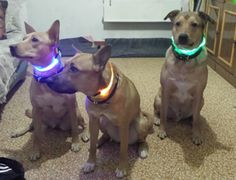 FREE SHIPPING WORLDWIDE for this item. STAY BRIGHT AT NIGHT! Our LED Dog Collars will keep your pup seen on the road or in the yard. Taking your dog out for a walk at night can be difficult and danger