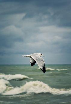 Let's Set Sails! : Photo