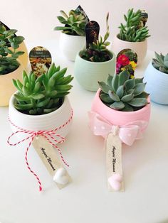 Piantine grasse bomboniere House Plants Decor, Plant Decor, 50th Anniversary Cakes, Diy Cadeau, Succulent Gifts, Diwali Gifts, Cactus Y Suculentas, Mothers Day Cards, Green Life