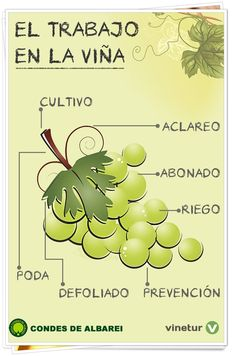 La mano del viticultor es fundamental para obtener un vino de calidad