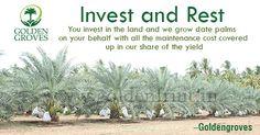 #Invest & #Rest #Goldengroves #Farmland #investment
