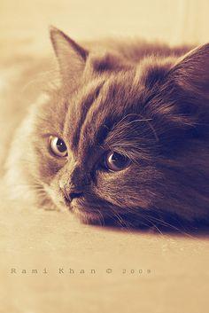 sweet dreams  cat