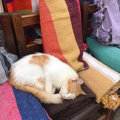 舌を出して眠るカーペット屋の猫。#エッサウィラ #モロッコ #猫 Tap the