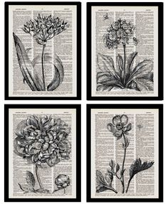 Botanical Book Page art prints by Tracy Abanin of Flea Market Trixie Book Page Art, Book Pages, Card Making Techniques, Art Techniques, Paper Book, Paper Art, Book Crafts, Paper Crafts, Doodle Pages