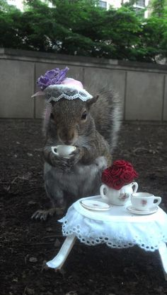 Sneezy The Penn State Squirrel enjoying Tea Time