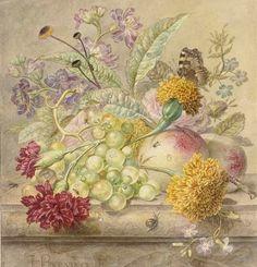 H. Berninck  Botanical Drawing  Late 18th century
