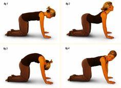 cat pose sciatica exercise