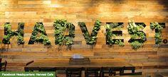Harvest Cafe at Facebook Headquarters