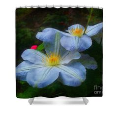 A pair of lovely white clematis flowers shower curtain.  Nature art by Susan.
