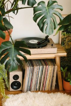 Creating a Jungle Record Corner — Black & Blooms