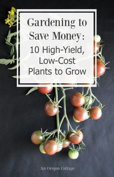 """Gardening to Save Money:10 high-yield, low-costplants to grow to help you answer the question, """"does gardening really save money?"""""""