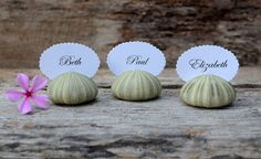 $22.50 for 10 - Natural Green Sea Urchin Shell Place Card Name Holders - 10 - Beach Wedding Reception Table Chic Decor - Guest Escort Card Favor Ocean  IDEA - this woman has a variety of colors and shells options.  maybe go in for a bulk order of 175 with scalloped oval cards the WE'LL personalize and see what kind of deal we can make???