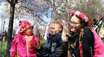 BEAUTY Cherry Blossom. Emilia Kuru ja tyttärensä Lusi, Anitta Iso-Markku Roihuvuoren kirsikkapuistossa.
