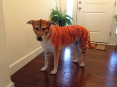 Tiger striped Halloween dog costume using snazaroo washable costume paint.