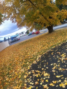 Fall in Hayden Idaho