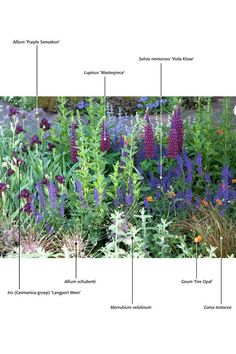 Dwarf cultivars & shorter Plant combinations for cold hardy gardens from a Netherlands site, Almost all are grown in the US as well. Use the Latin names & look them up. Herbaceous Border, Herbaceous Perennials, Purple Garden, Colorful Garden, Back Gardens, Outdoor Gardens, Rosen Beet, Short Plants, Planting Plan