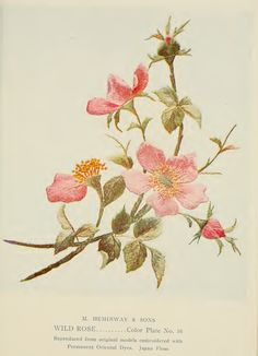 "Wild Rose Embroidery from ""A Treatise on Embroidery"" published in 1907."