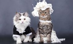 """Pets viram """"daminhas de honra"""" e são convidados ilustres de casamentos"""