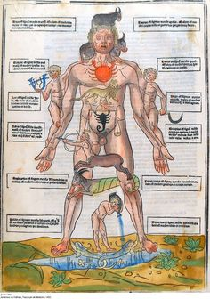 Zodiac Man: Man as Microcosm in the Medieval Worldview [Homo Signorum; Medieval Medicine and Astrology; Medical Astrology, Astrology Books, Learn Astrology, Astrology Zodiac, Zodiac Signs, Tantra, Book Of Shadows, Illuminated Manuscript, Sacred Geometry