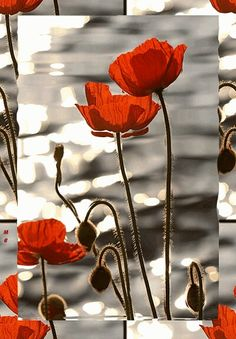 Poppies google search flowers pinterest flowers english wikipedia poppies flower simple family history twitter animation morning oil paintings mightylinksfo